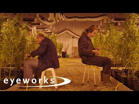 Eigen Kweek - Trailer