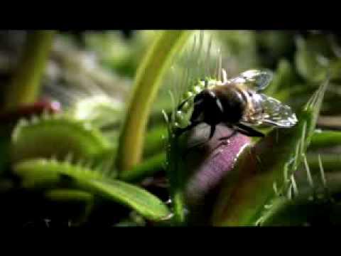 Life - BBC 2009 Trailer - Documentary